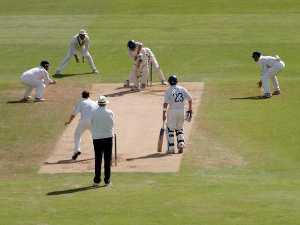 Cricket_crop